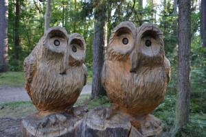 owl-1643872_1280